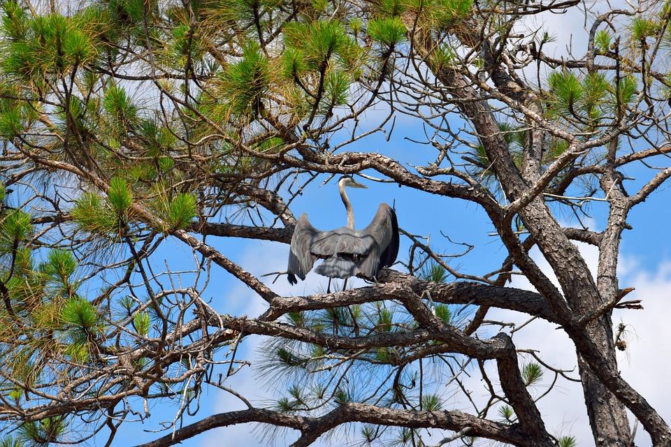 Tree, Nature, Wood, Branch, Wildlife, Bird, Outdoors