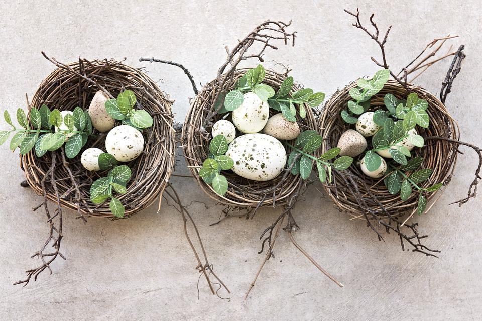 Bird's Nest, Eggs, Bird, Nests, Breeding