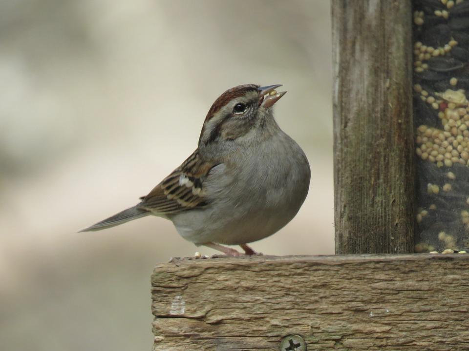 Bird, Nature, Wildlife, Outdoors, Brown And Tan