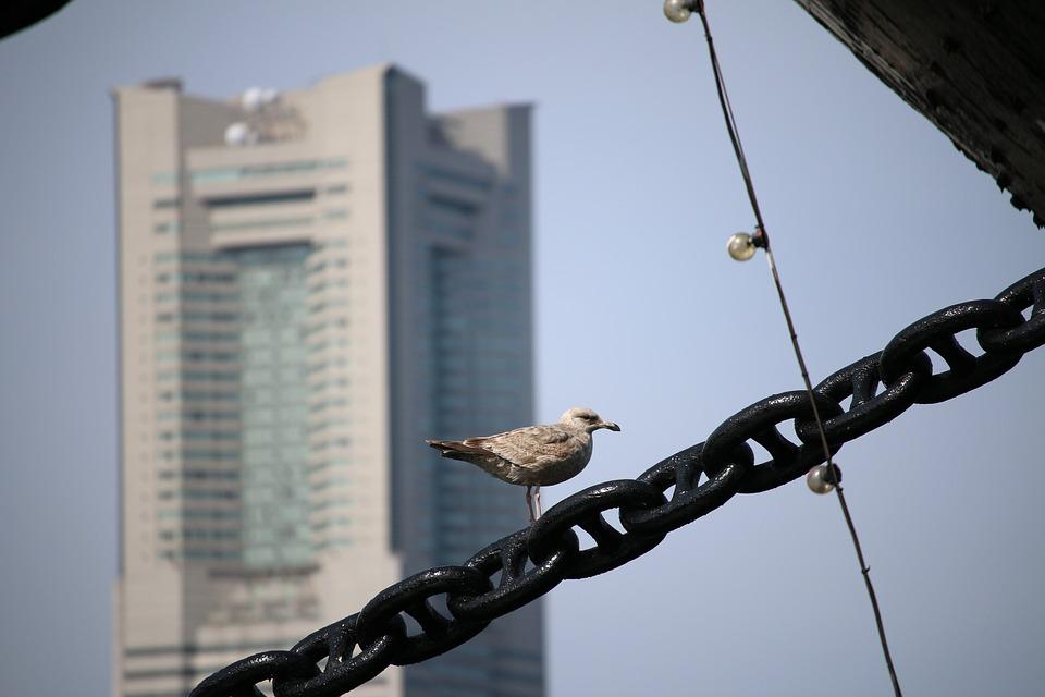 Yamashita Park, Sea Gull, Hikawa Maru, City, Town, Bird
