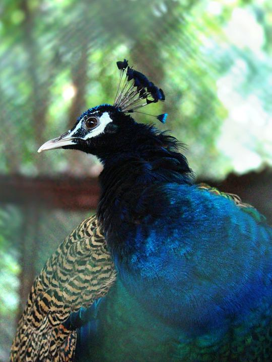 Animal, Bird, Nature, Feather, Colorful, Head, Color