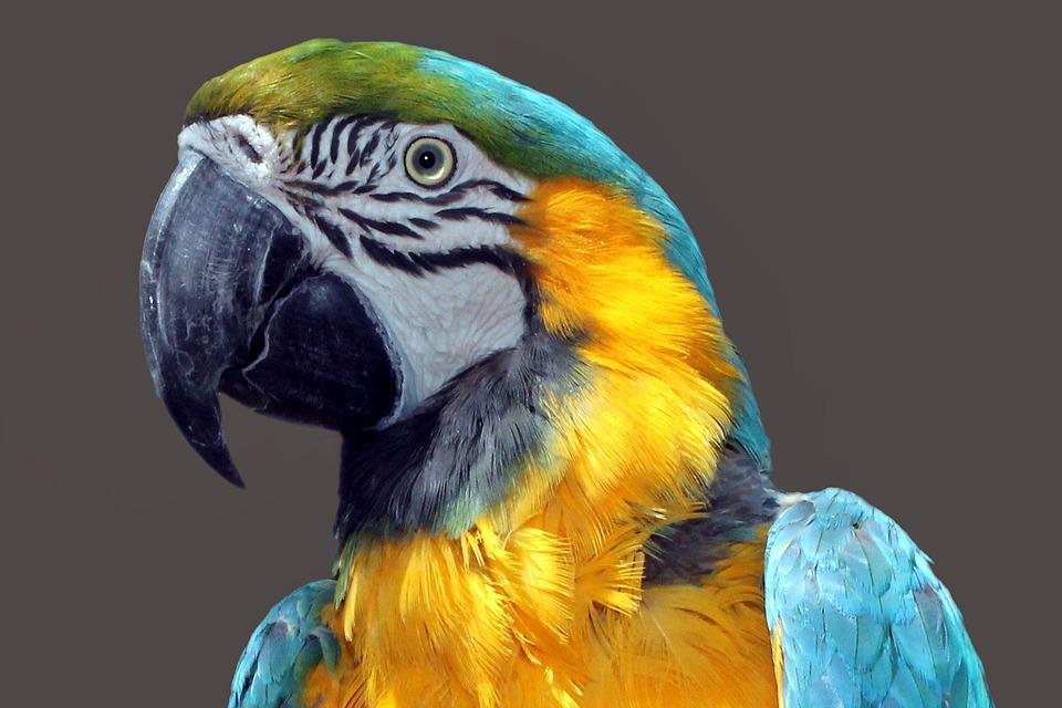 Parrot, Ara, Bird, Colorful, Plumage, Color