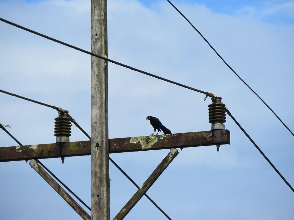 Bird, Wire, Electricity, Tropical, Colorful Bird