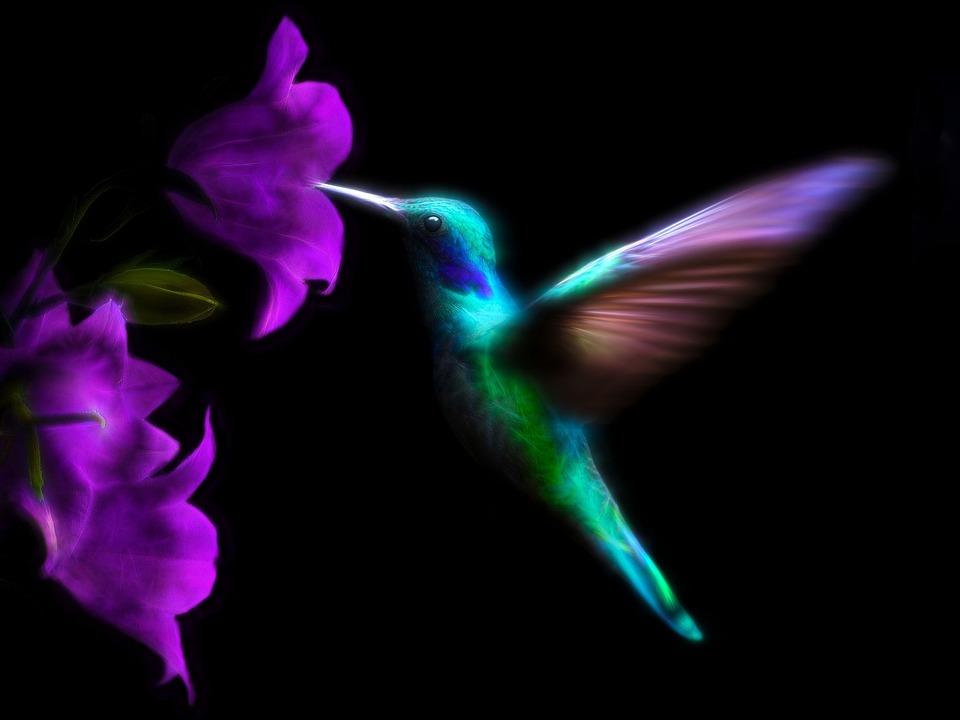 Hummingbird, Bird, Colorful, Ave, Flight, Flying