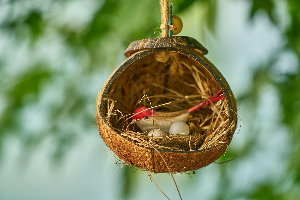 Bird, Bird's Nest, Decor, Decoration, Home, Egg, Birds