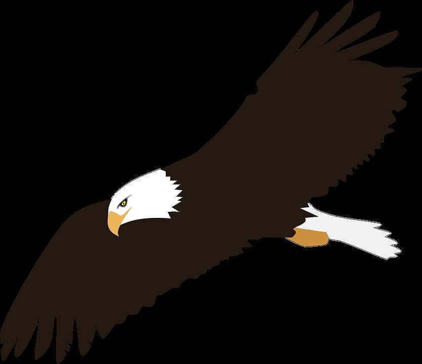 Bird, Colour, Eagle