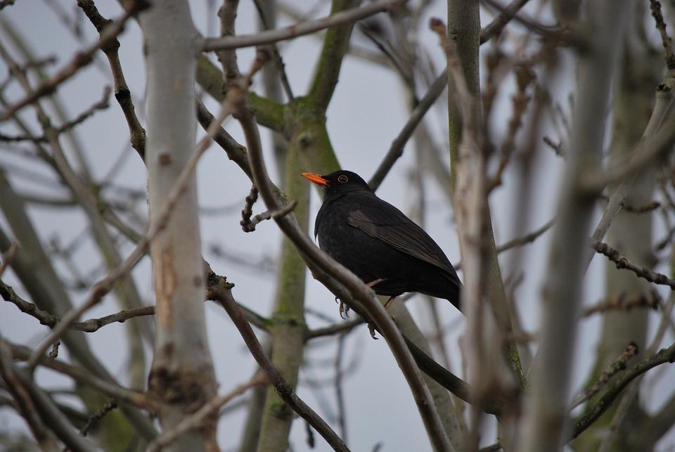 Bird, Tree, Nature, Outdoors, Wildlife, Environment