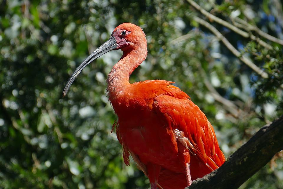 Bill, Exot, Animal, Red, Zoo, Feather, Creature, Bird