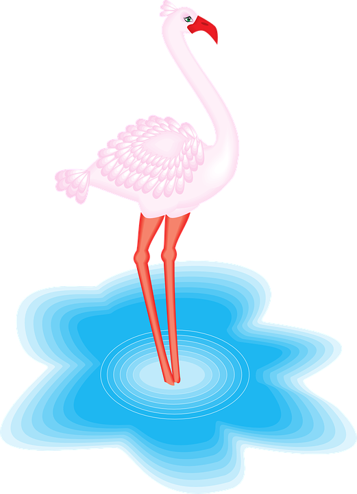Flamingo, Bird, Water, Wings, Feathered, Exotic, Fauna