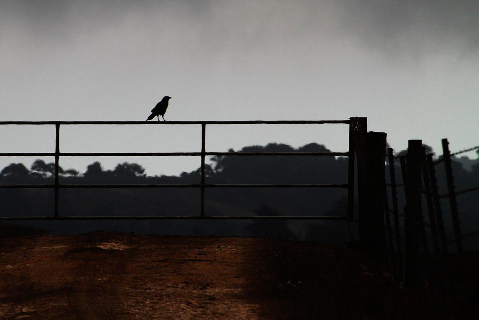Crow On A Fence, Farm, Corvid, Agriculture, Fence, Bird