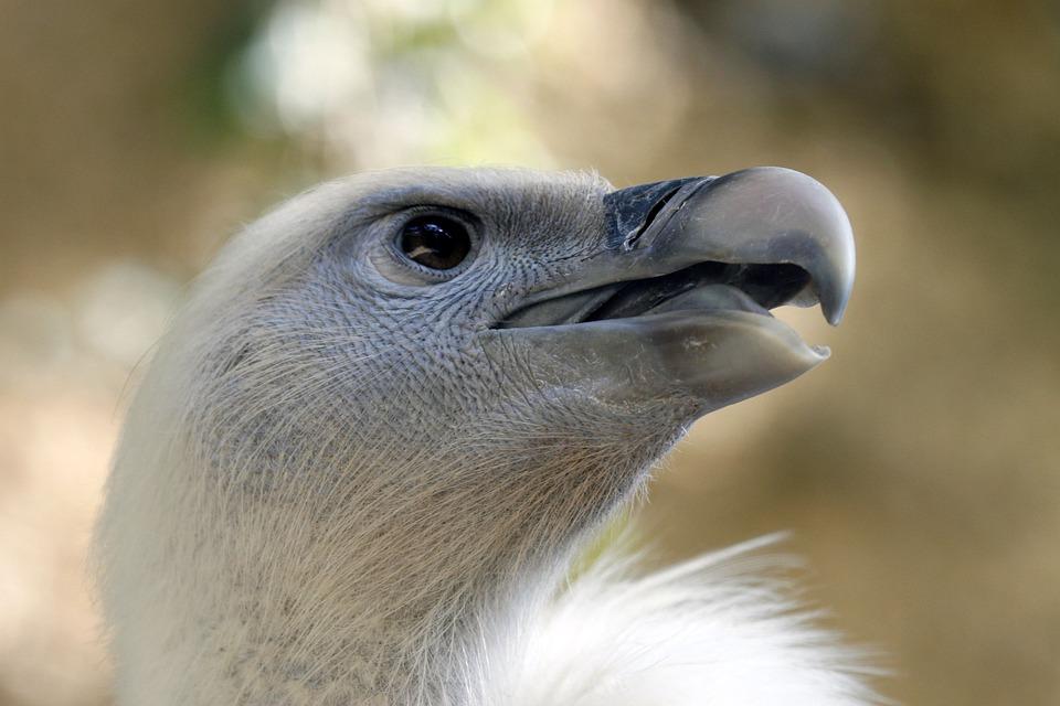Fauna, Bird, Nature, Animal, Portrait