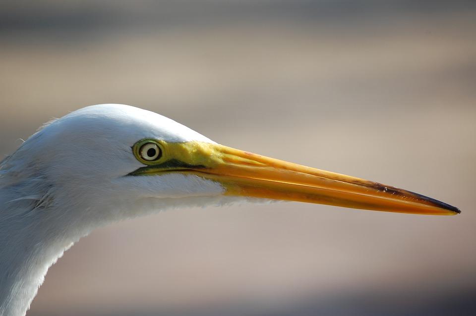 Bird, Nature, Fauna