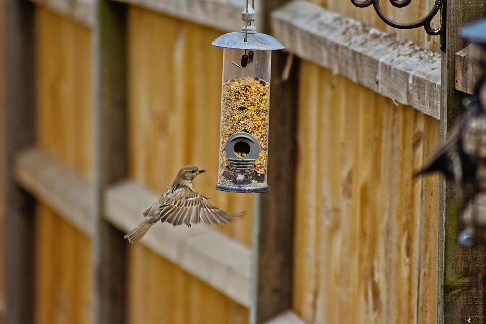Bird, Sparrow, Nature, Animal, Plumage, Feather, Birdie