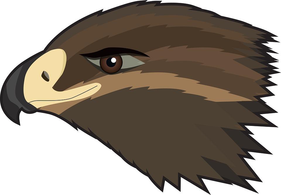 Hawk, Eagle, Bird, Predator, Cartoon, Feathered Race