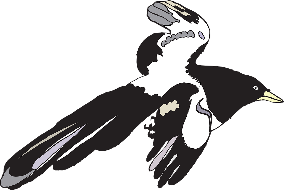 Bird, Black, White, Spread, Wings, Flying, Feathers