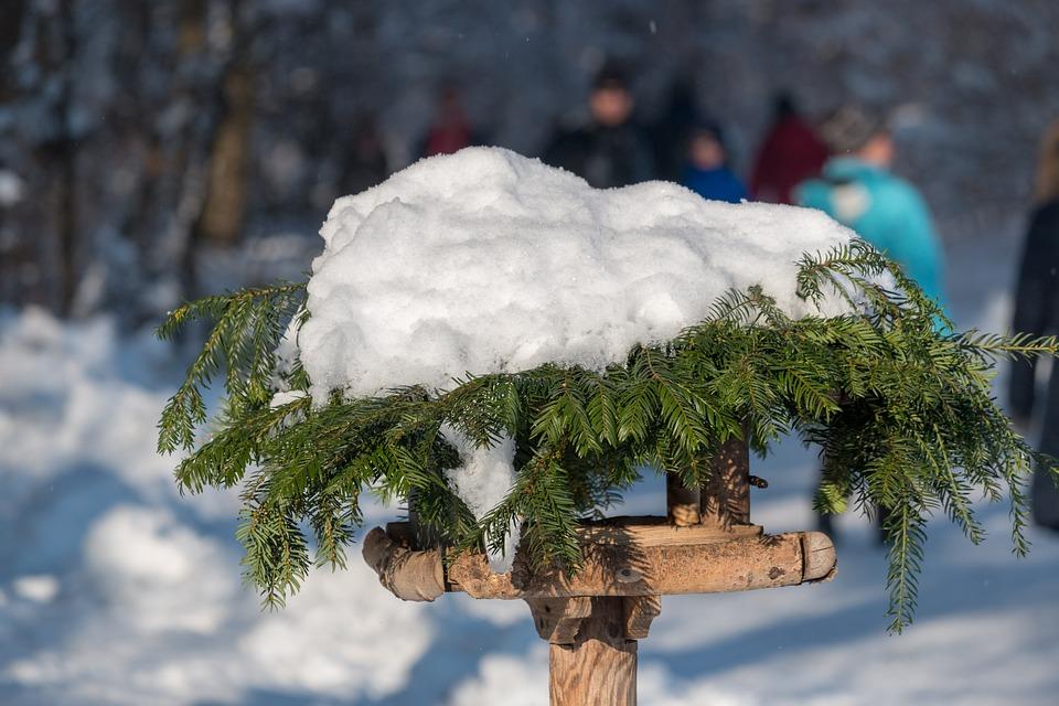 Snow, Bird Feeder, Aviary, Winter, Bird, Cold, Snowy