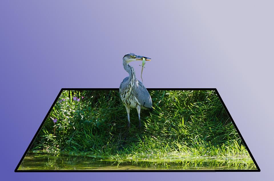 Grass, Bird, Nature, Animal, Background, Figure