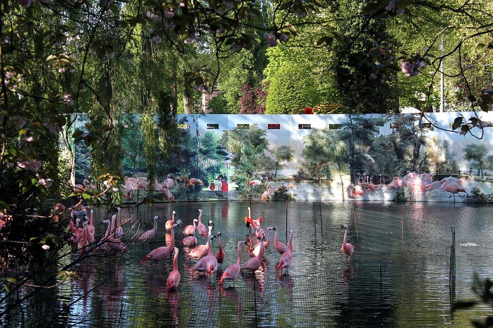 Flamingo, Flamingos, Flamingoes, Pink, Bird, Water
