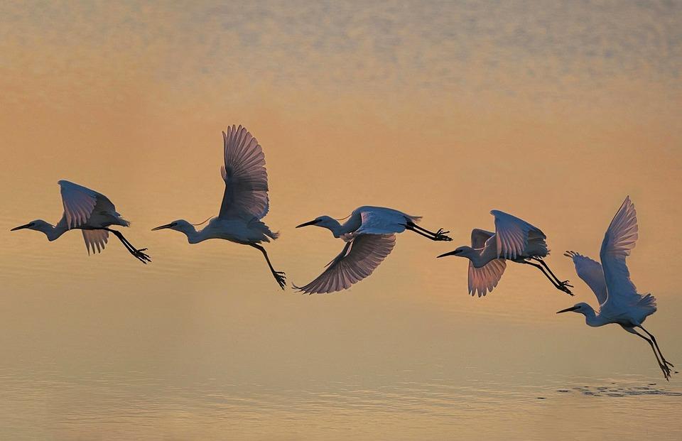 Bird, Wildlife, Flight, Water, Nature, Fly