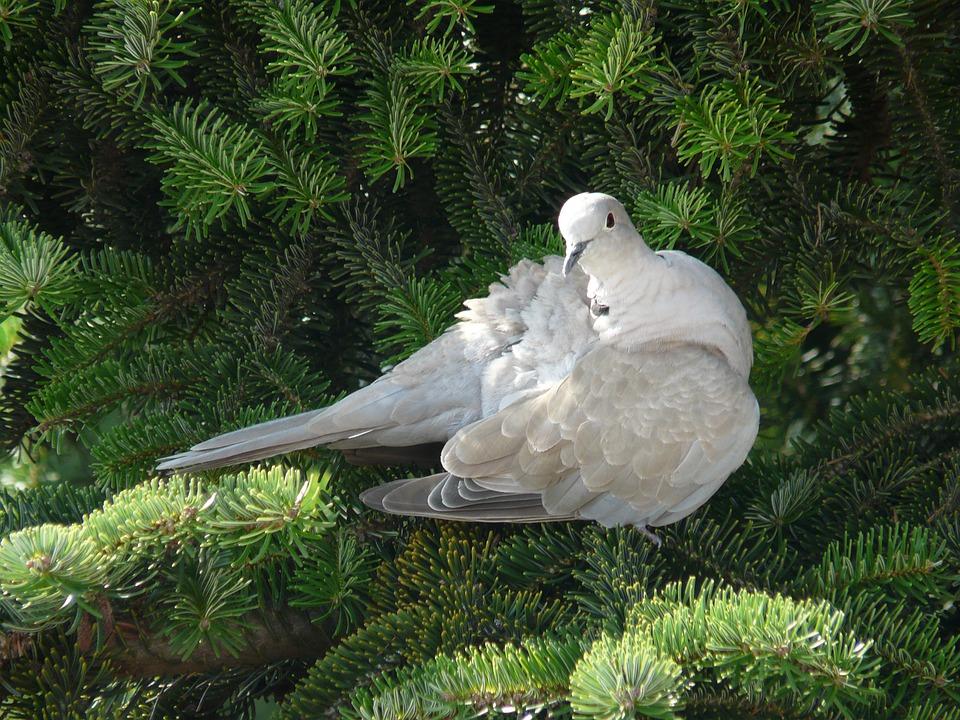 Bird, Dove, Wings, Nature, Room, Gentleness