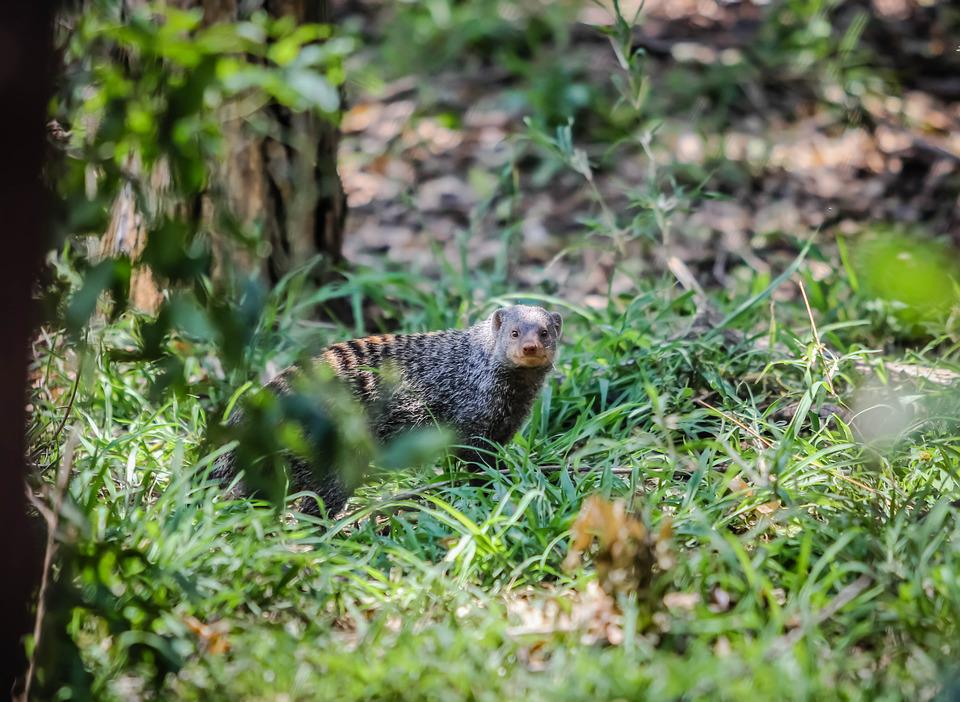Animal, Wildlife, Nature, Mammal, Bird, Outdoors, Grass