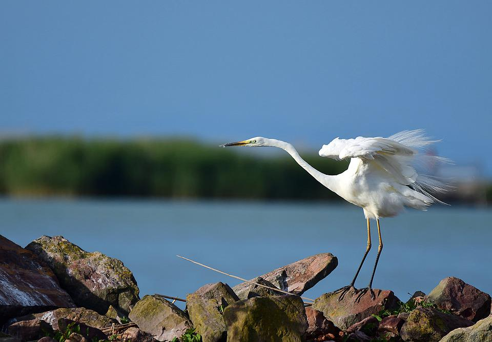 Heron, Bird, Nature, Water