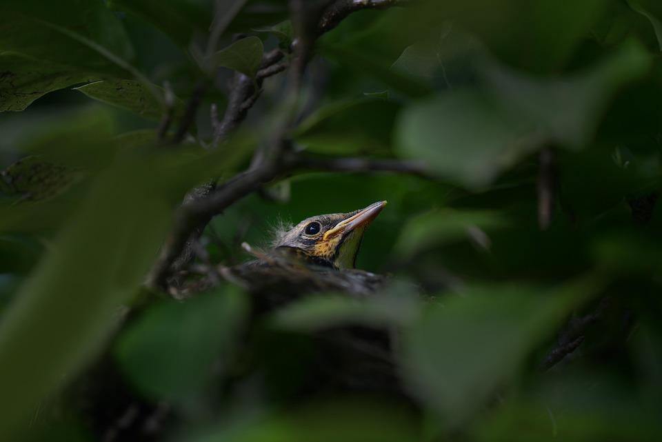 Bird, Nest, Birdnest, Hidden, Versteckt, Focus