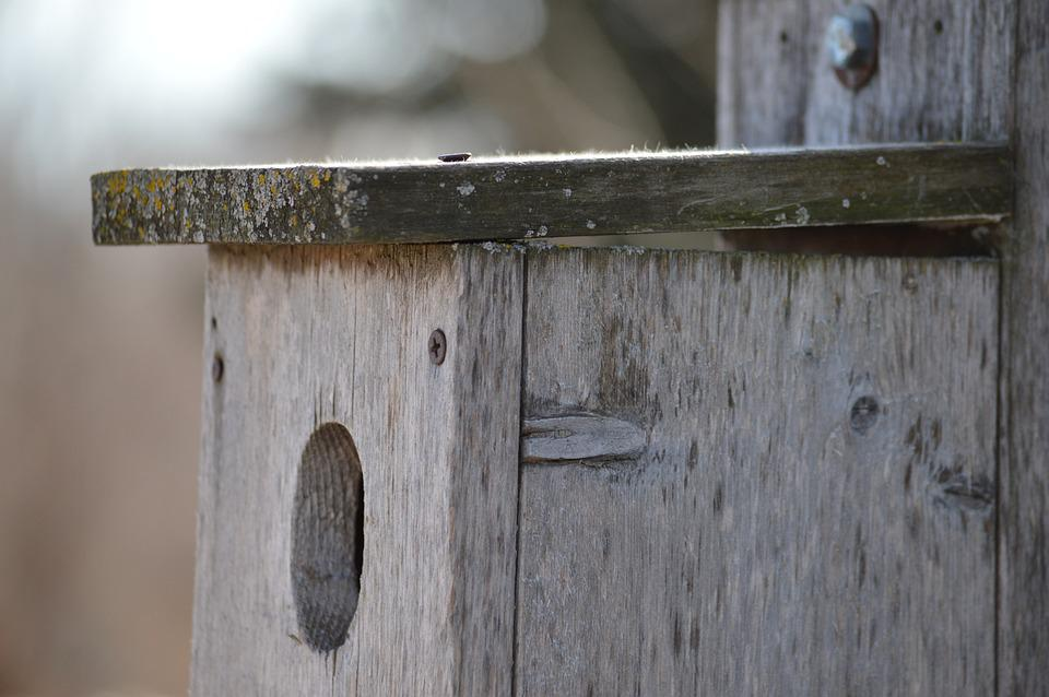 Birdhouse, Wooden, Old, Bird, Box, Home, Nest, Empty
