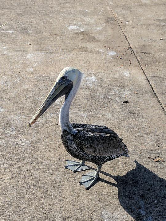 Bird, Big Bird, Hungry Bird