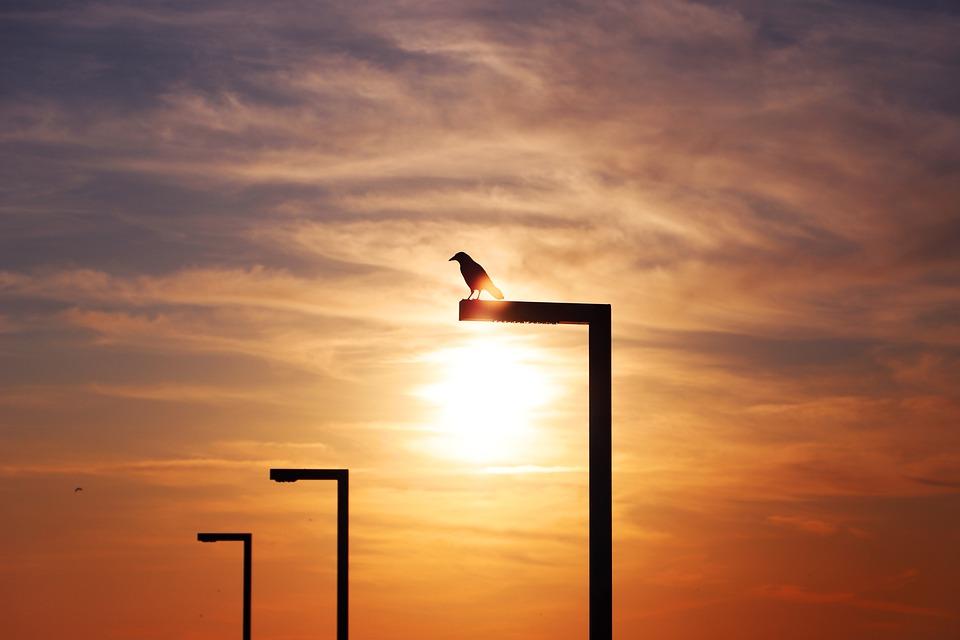 In The Evening, Bird, Sunset