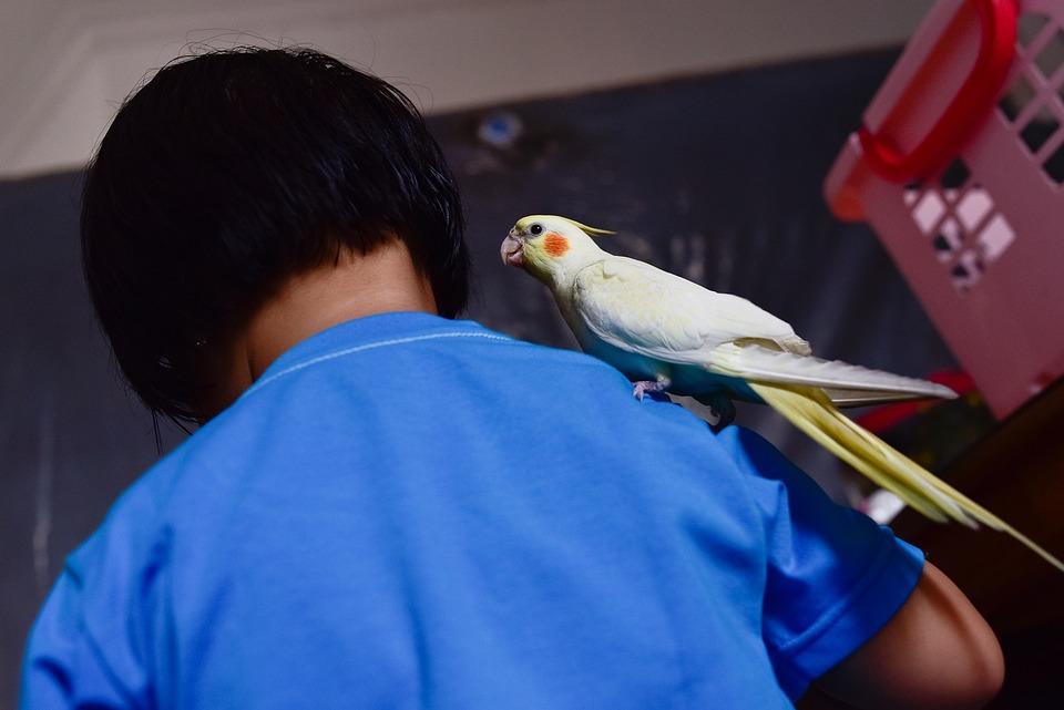 Bird, Kid, Animal