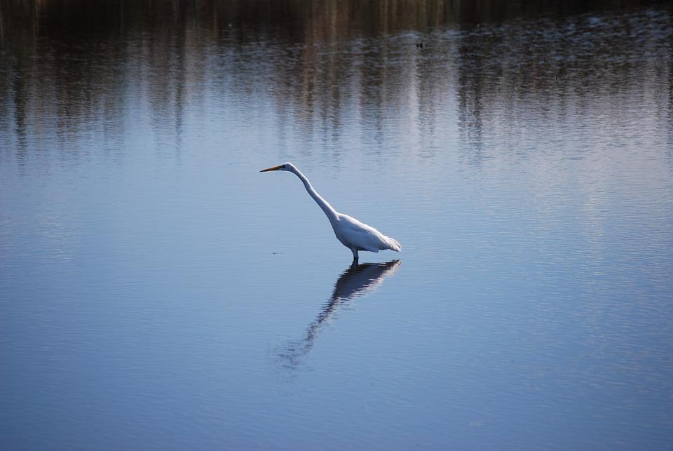 Bird, Lake