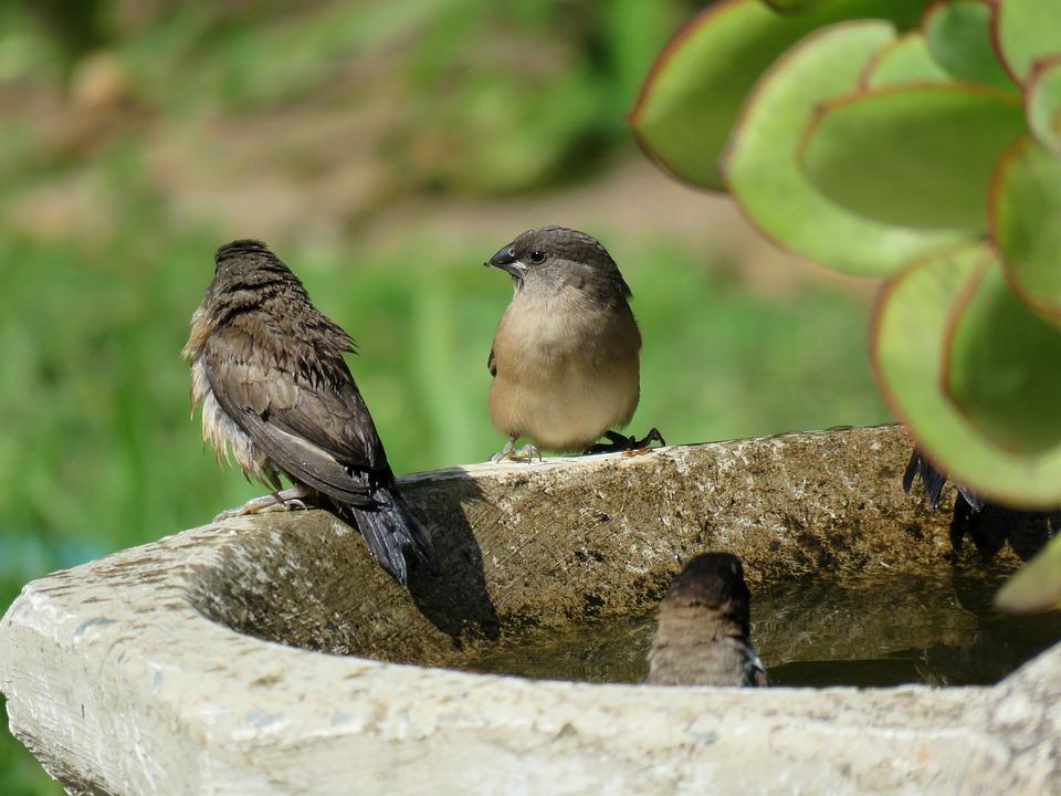 Birds, Birdlife, Bird Life, Nature, Birdwatching, Avian