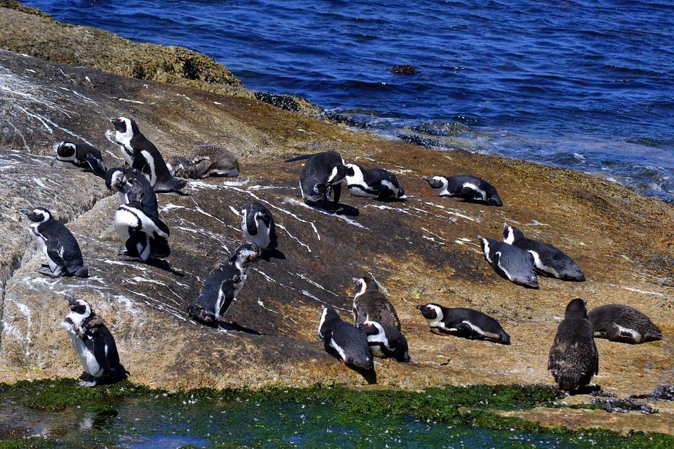 Bird Life, Ocean, Nature