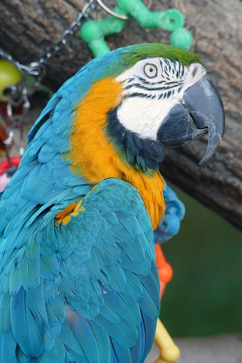 Parrot, Bird, Macaw, Feather, Tropical, Beak, Wildlife