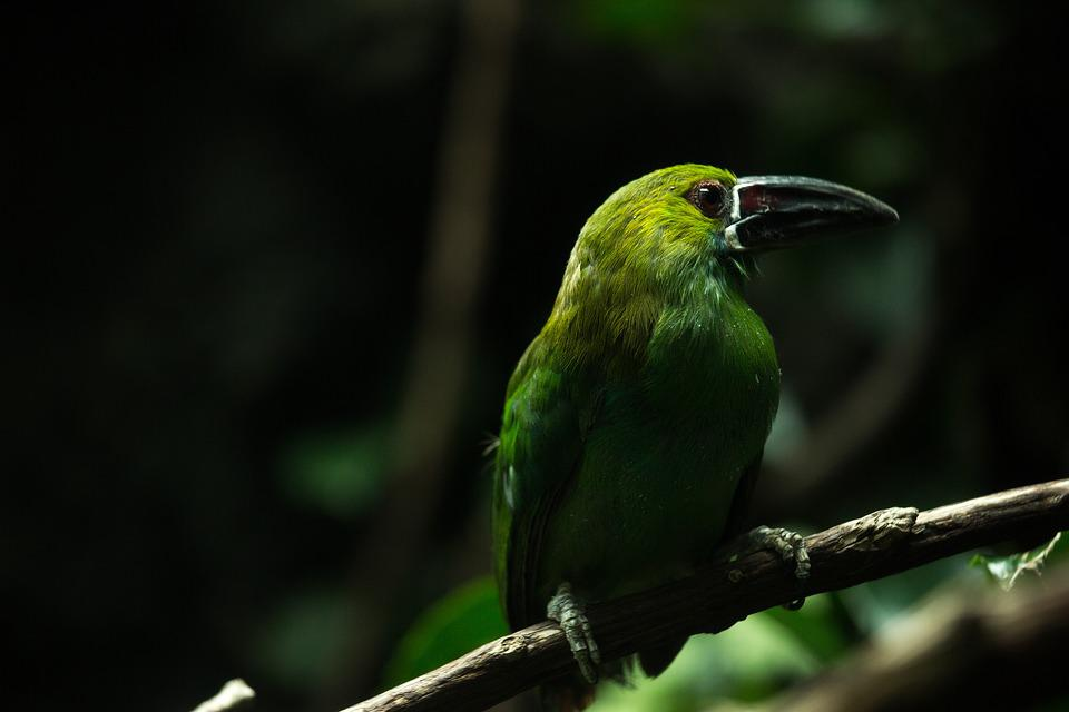 Animal, Avian, Bird, Branch, Feathers, Macro, Perched