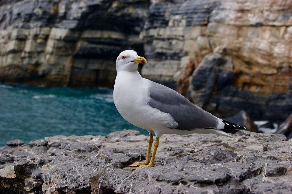 Gull, Bird, Natural Beauty, Lake, Birds