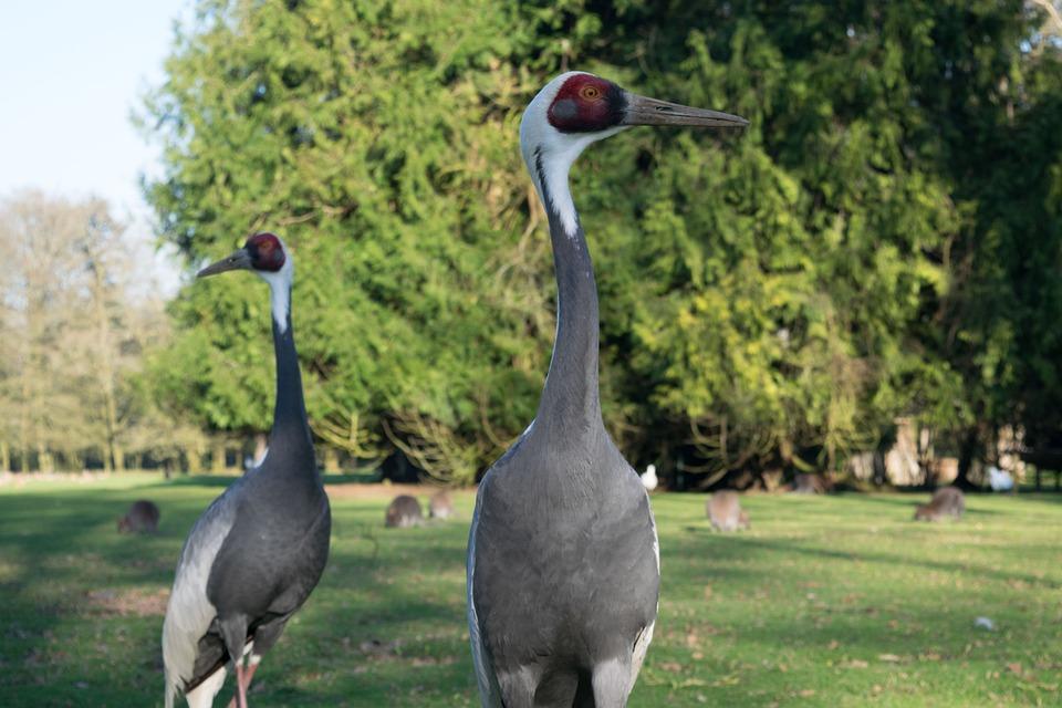 Bird, Birds, Animal, Zoo, Park, Nature, Image, Picture