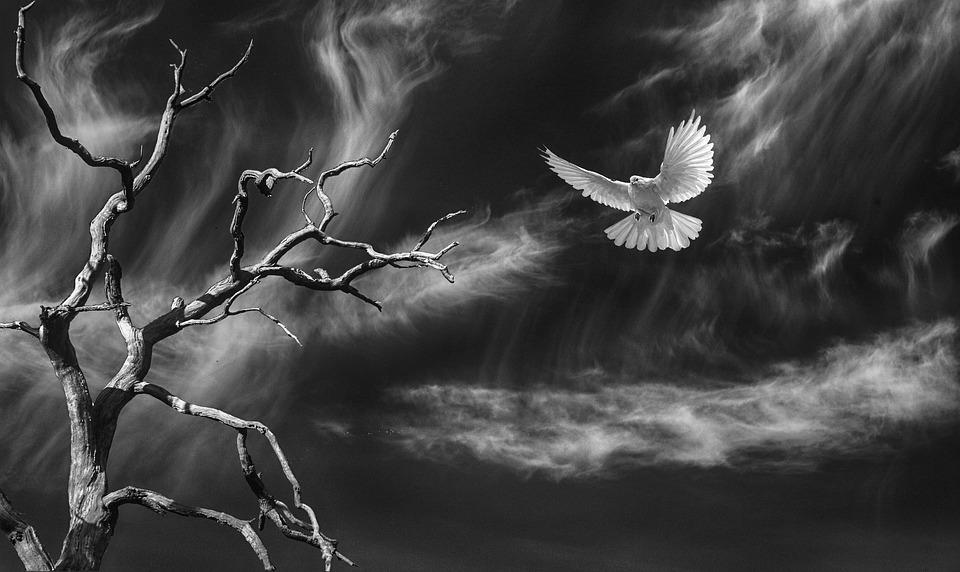 Nature, Bird, Dove, Sky, Clouds, Space, Tree, Dead Tree