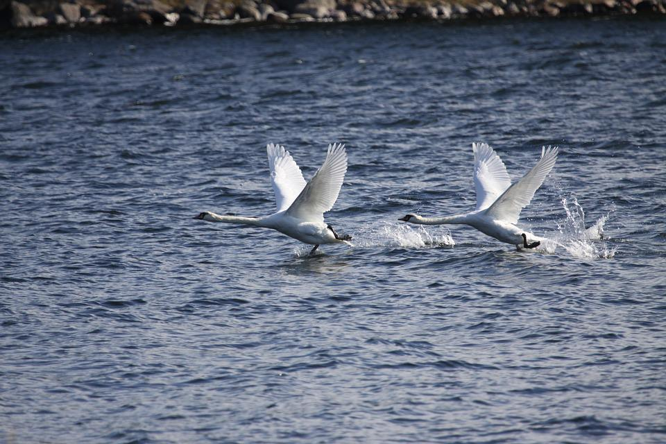 Water, Nature, Sea, Bird, Outdoors, Ocean, Summer