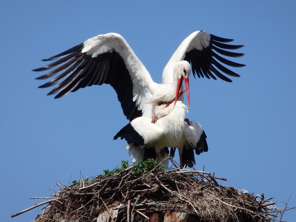 Animal, Stork, Bird, Migratory, Nest, Spring, Nature