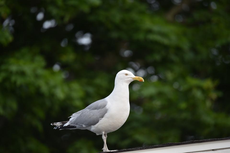 Nature, Bird, Outdoors, Wildlife