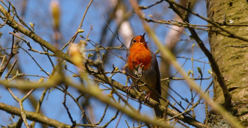 Tree, Nature, Bird, Outdoors, Wildlife, Wood, Wing