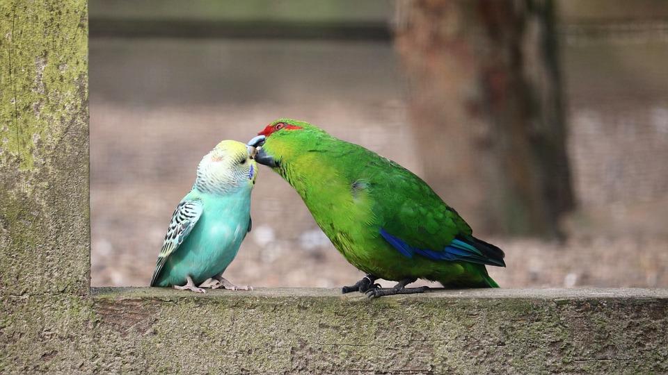 Bird, Animal, Nature, Animal World, Wing, Tropical