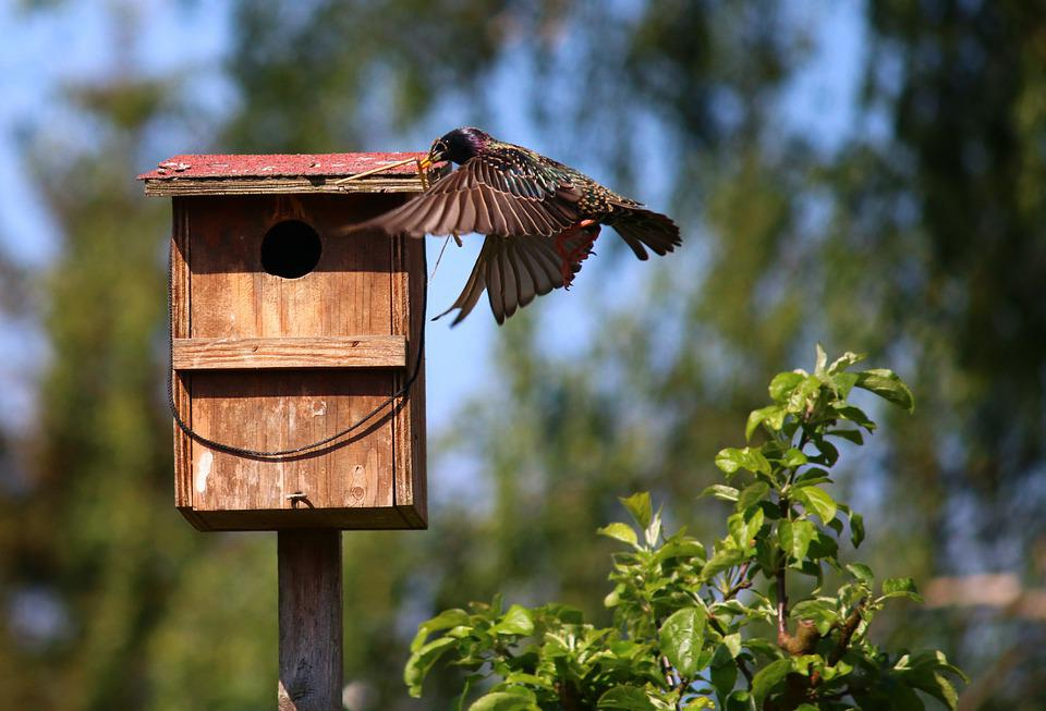 Singstar, Sing Star, Bird, Bird's Nest, Nest Building