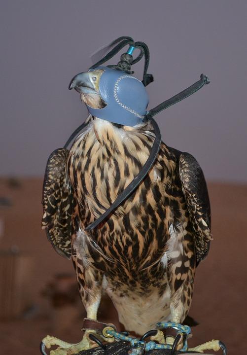 Adler, Air Show, Raptor, Desert, Flight, Bird Of Prey
