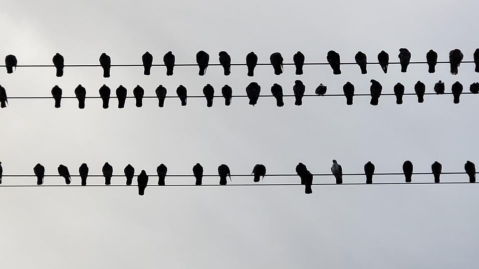 Bird, Bird On A Wire, Outdoor, Perch, Birdwatching