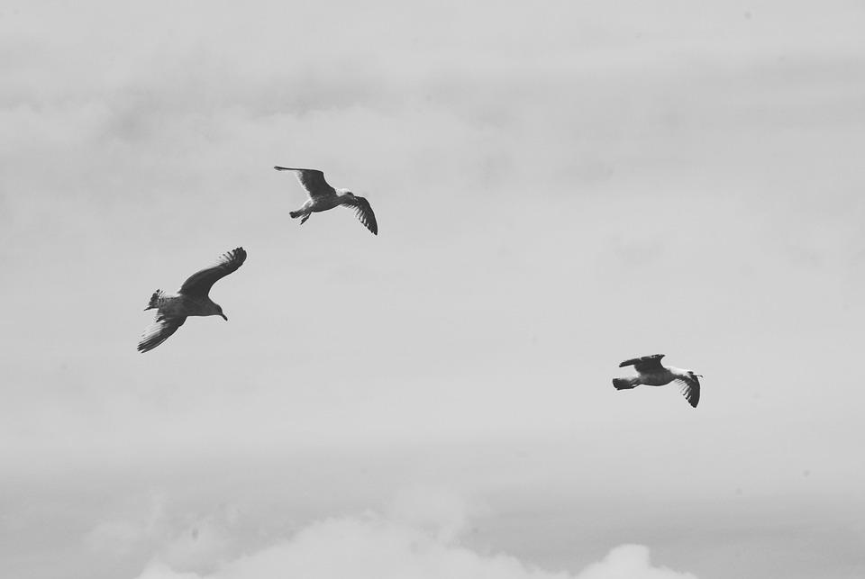 Bird, Sky, Outdoors, Flight, Action