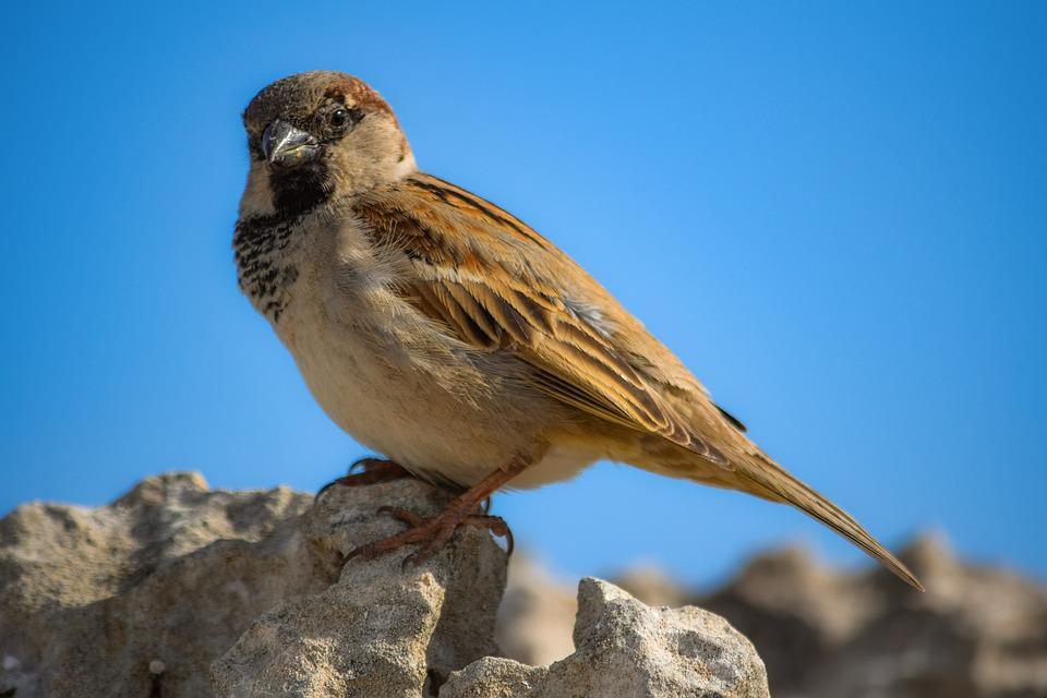 Sparrow, Nature, Wildlife, Bird, Animal, Outdoors