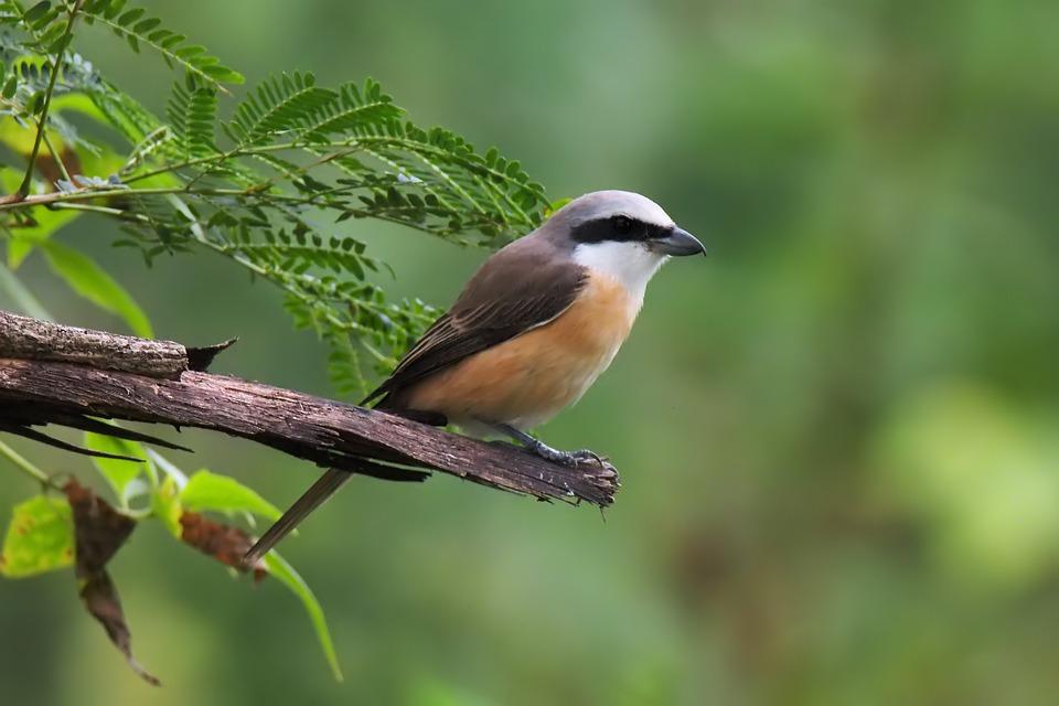 Wildlife, Bird, Nature, Outdoors, Animal, Wild, Little